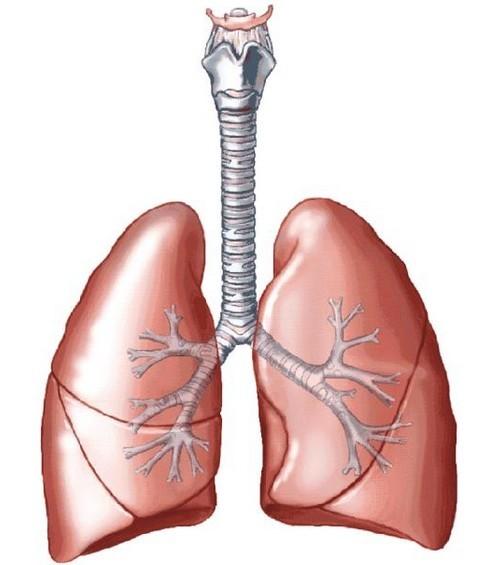 中医眼中的肺癌