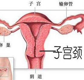 http://www.wd999.com/gongjingai/gongjingaifufa/48239.html