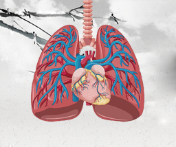 肺鳞癌该怎么治