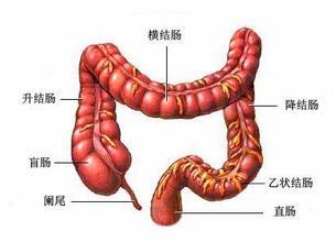 结肠癌出现肝转移怎么治