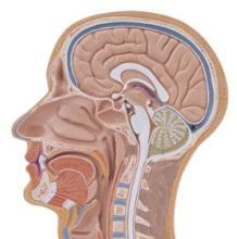 脑瘤颅外转移