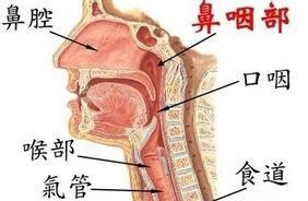 导致鼻咽癌发生的因素