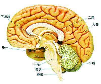 手术后脑瘤病人能活多久