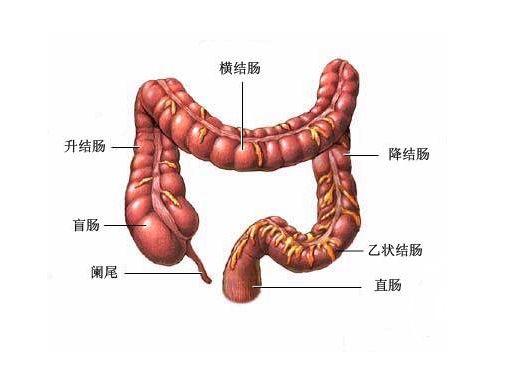 直肠癌中医怎么治疗