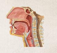 鼻咽癌化学治疗方法