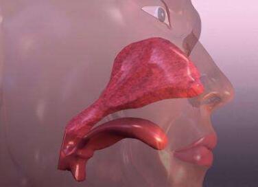 鼻咽癌晚期饮食注意事项
